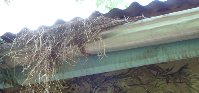 5 Easy Steps to Get Your Home Winter Ready Blocked Gutters