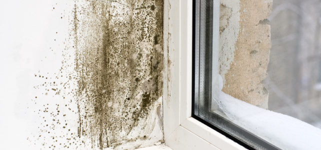 Signs That Your House Has a Damp Problem