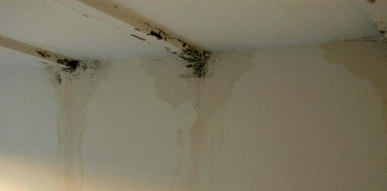 Mould and damp in property